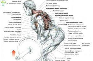 упражнение тяга в наклоне